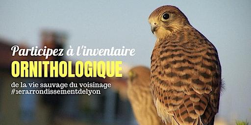 A la découverte des oiseaux du 1er arrondissement de Lyon