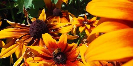 Découverte de l'apiculture de loisir tickets