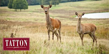 Winter Deer Walk at Tatton Park tickets