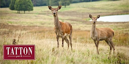 Winter Deer Walk at Tatton Park