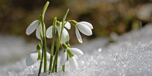 Potted Snowdrop Bulb Gift Workshop / Gweithdy Anrheg Bwlb wedi'i Botio