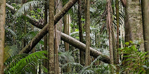 Lianas, Tropical Forests and the Global Carbon Cycle