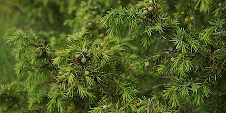 Bee Active - clear a nutrient-poor grassland and plant juniper trees tickets