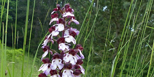 Bee Active - lend a helping hand to orchids and rare insect species