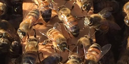 The Hernando Beginning Beekeepers Workshop Series