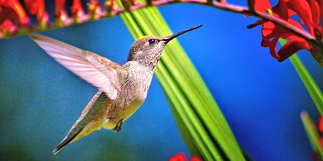 Free Seminar: Attracting Birds to Your Yard tickets