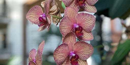 Free Seminar: Tried & True Orchid Tips