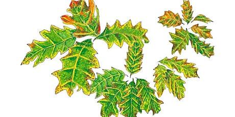 Christmas Tree decoration workshop - with illustrator Rekha Mistry tickets