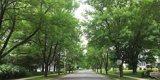Emerald Ash Borer Preparedness & Management for Windham County Communities