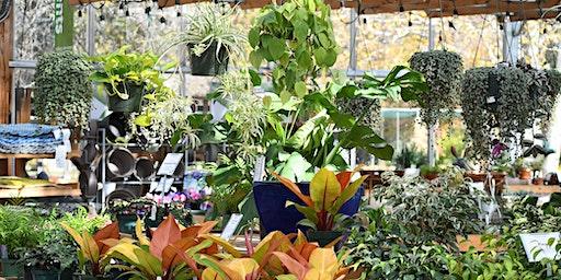 Garden School Series: Houseplants 101