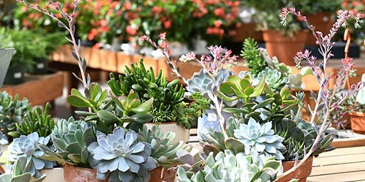 Garden School Series: Succulents, with a Make & Take