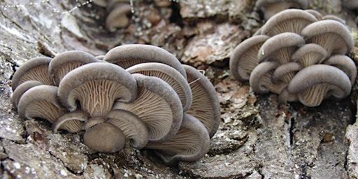 Mushrooms for Food & Medicine