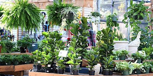 Garden School Series: Advanced Houseplants