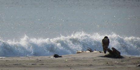 Winter Wonders: New Year's Day: Fort Tilden Beach, Queens Photography & Nature Walking Tour tickets