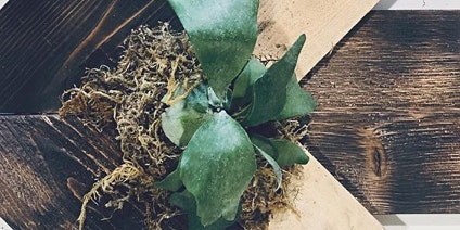ARTiCraft DIY- Design It Yourself  Staghorn Plant Mounting Tutorial Every Saturday 12-3pm