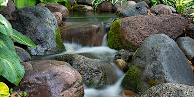 How To Refresh Your Water Feature!