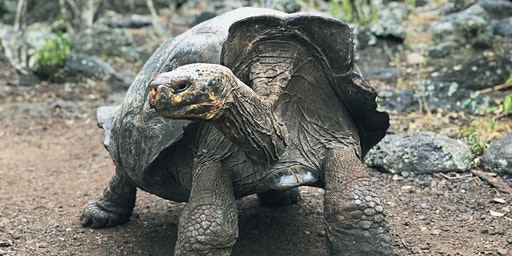 Spotlight on Travel: Expedition Cruising - Galapagos & Polar