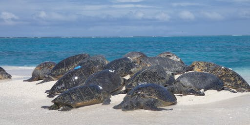 Sea Turtles in the Pacific Islands Region