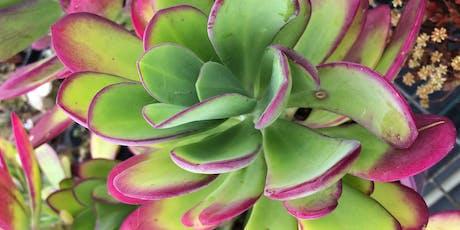 Coachwood Nursery- Amazing Succulents, Indoor Plants & Propagation Workshop tickets