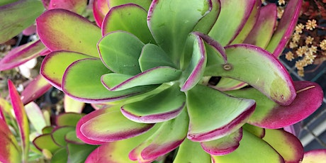 Coachwood Nursery- Amazing Succulents, Indoor Plants & Propagation Workshop tickets