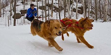 Skijoring at Arrowhead Provincial Park 2020 tickets