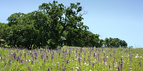 Mangini Ranch Wildflower Hike tickets