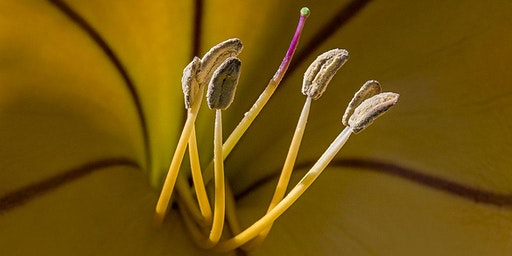 ARTISTIC FLOWER MACRO PHOTOGRAPHY
