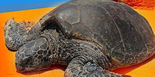 Wildlife Talk - Turtle Talk with Don & Lesley Bradley