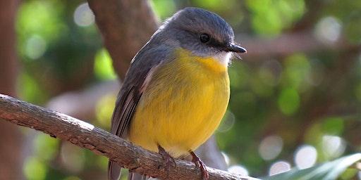 Carol Probets Summer Bird Walk