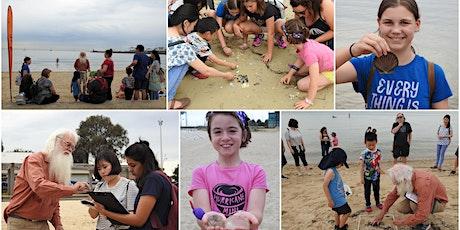 Citizen Scientist : Sea Shell Safari & Microplastics Survey 04 January 2020 St Leonards  tickets