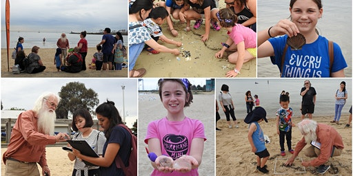 Citizen Scientist : Sea Shell Safari & Microplastics Survey 12 January 2020 Dromana