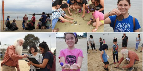 Citizen Scientist : Sea Shell Safari & Microplastics Survey 13 January 2020 Sandridge Beach, Port Melbourne  tickets