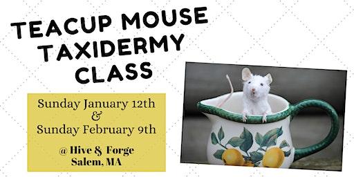 Teacup Mouse Taxidermy Class