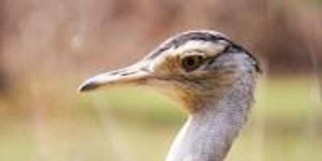 Junior Rangers Nature Treasure Hunt - Serendip Sanctuary tickets