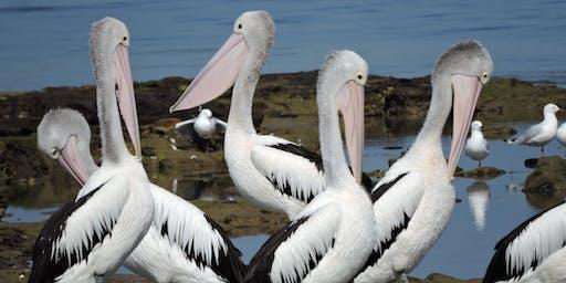 Birdlife Boat Tour 17 January 2020 - Paynesville