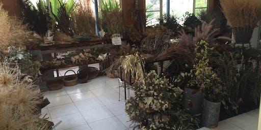 Coachwood Nursery - Fabulous Dried Flowers