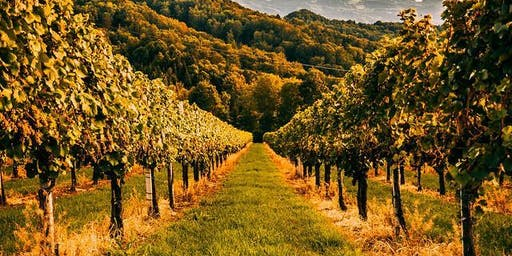 The Old Empire: Austria, Hungary, and Friends - Wine Tasting