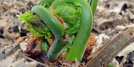 Wild Edible & Medicinal Plants with Dr. Rick Van de Pol tickets