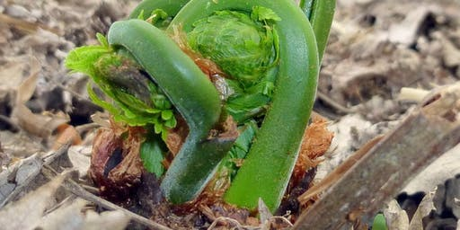 Wild Edible & Medicinal Plants with Dr. Rick Van de Pol