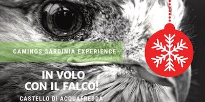 In volo con il falco: falconieri al Castello di Acquafredda