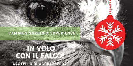 In volo con il falco: falconieri al Castello di Acquafredda biglietti