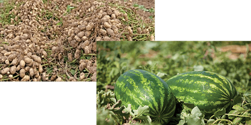 2020 Tri-County Crop Update and Pesticide Applicator Training