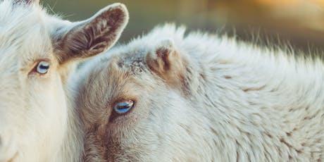 Animal Activist Support Circle tickets