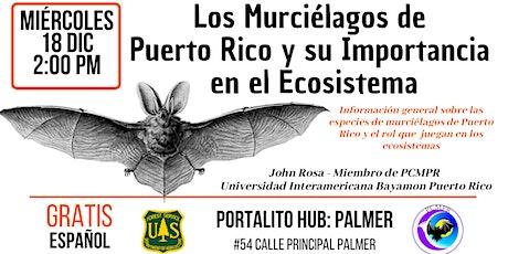 Los Murciélagos de  Puerto Rico y su Importancia  en el Ecosistema entradas