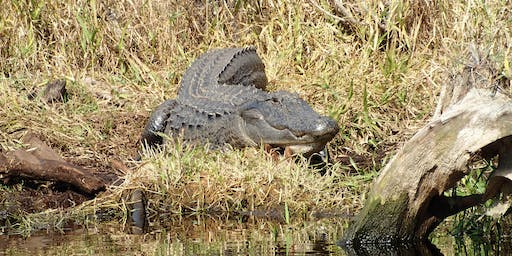 Okefenokee Gator Hunt (Cameras Only), Spring in the Swamp!!