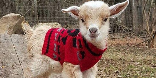 Painting with Baby Goats in  Christmas Sweaters @ Waterside