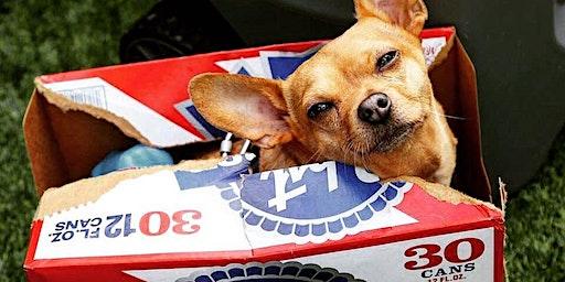Pabst Dog Dayz