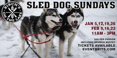 Sled Dog Sunday's at Birch's on the Lake