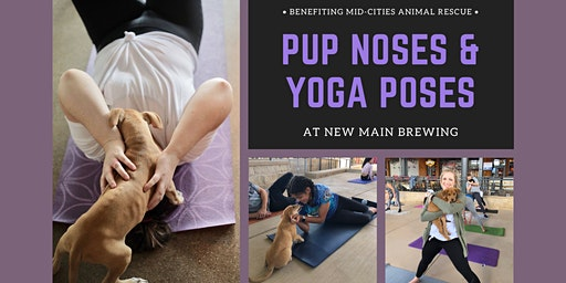 Paws 'n' Poses: Puppy Yoga