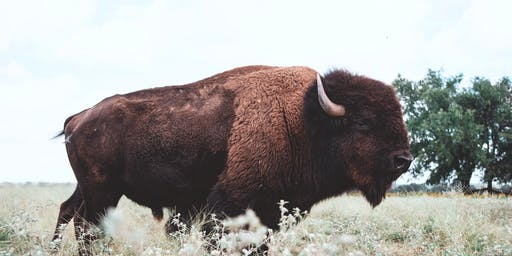 2020 Bison Field Harvest